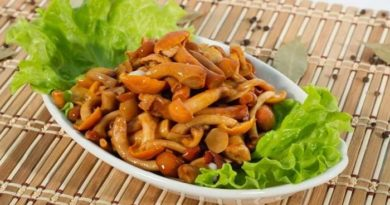 Как мариновать опята — простые рецепты приготовления грибов на зиму в банках